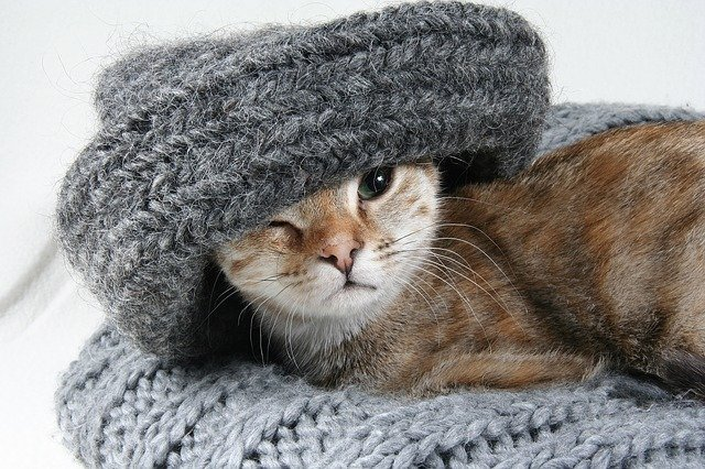 sweater cat